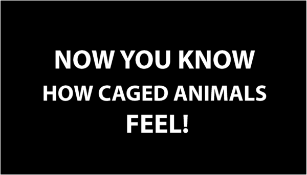 Masca estetica text Now you know how caged animals feel-5207